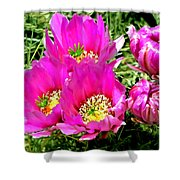 Beaver Tail Cactus Painting Shower Curtain
