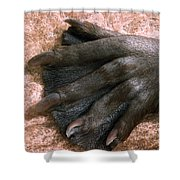 Beavers Hind Foot Shower Curtain