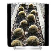 Bed Of Barrel Cacti  Shower Curtain