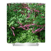 Bed Of Bleeding Hearts Shower Curtain