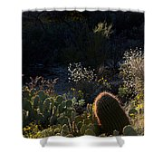 Bed Of Cactus Shower Curtain