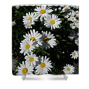 Bed Of Daisies Shower Curtain