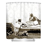 Bed Time For Kitty Cats Histrica Photo Circa 1900 Shower Curtain
