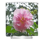 Bedazzled By The Light Louisiana Confederate Rose Shower Curtain