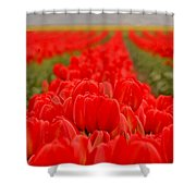 Beds Of Red Shower Curtain
