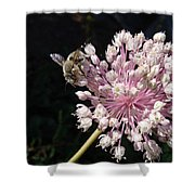 Bee And Allium Shower Curtain