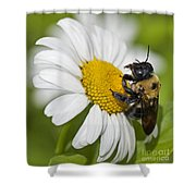 Bee And Daisy Shower Curtain
