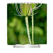 Bee And Teasel Shower Curtain