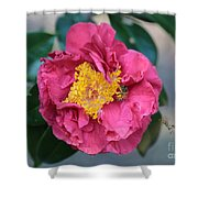 Bee And Wasp On Camellia Shower Curtain