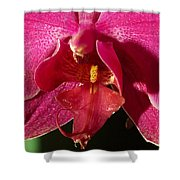 Bee Appeal To Pollinate Shower Curtain