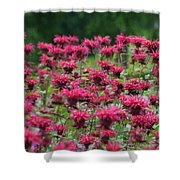 Bee Balm Bounty Shower Curtain