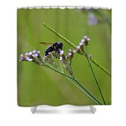 Bee Blue Shower Curtain