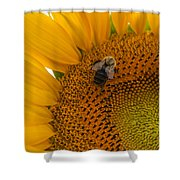 Bee Business Shower Curtain