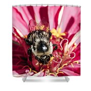 Bee Close Up On Pinkish Red Flower Shower Curtain