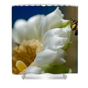 Bee Drinking The Nectar Of Saguaro Cactus Flower Shower Curtain