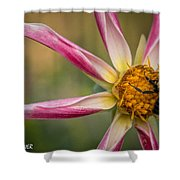 Bee Enjoying A Willie Willie Dahlia Shower Curtain