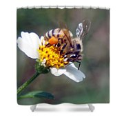 Bee- Extracting Nectar Shower Curtain