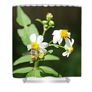 Bee-flower Pollen Shower Curtain