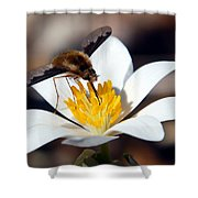 Bee Fly And Bloodroot Shower Curtain