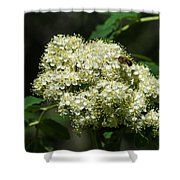 Bee Hovering Over Rowan Truss - Featured 3 Shower Curtain