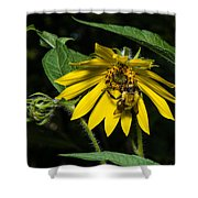 Bee In A Wild Flower Shower Curtain
