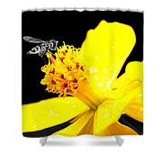 Bee In Black And White Shower Curtain