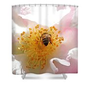 Bee In Camellia Shower Curtain