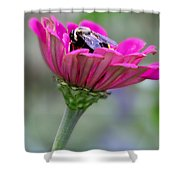 Bee In Pink Flower Shower Curtain