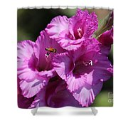 Bee In Pink Gladiolus Shower Curtain