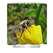 Bee Mimic On Primrose Shower Curtain