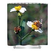 Bee- Nectar Shower Curtain
