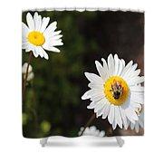 Bee On A Daisy 2 Shower Curtain