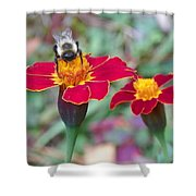 Bee On A Marigold 2 Shower Curtain