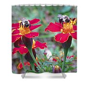Bees On A Marigold 4 Shower Curtain