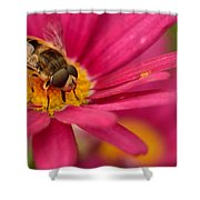 Bee On A Pink Daisy Shower Curtain