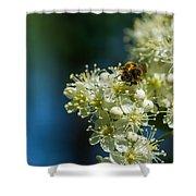 Bee On A Rowan Flower - Featured 3 Shower Curtain