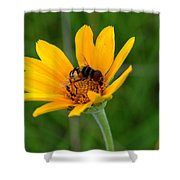 Bee On A Smooth Oxeye Shower Curtain