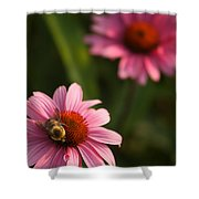 Bee On Coneflower Shower Curtain