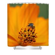 Bee On Cosmo Shower Curtain