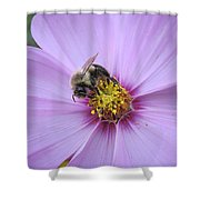 Bee On Cosmos Shower Curtain