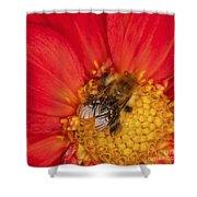 Bee On Dahlia - 2 Shower Curtain