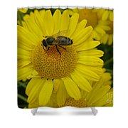 Bee On Daisy Shower Curtain