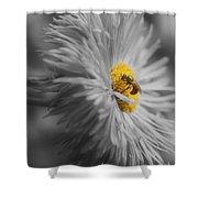 Bee On Daisy Flower Shower Curtain