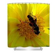 Honey Bee On Sunflower Shower Curtain