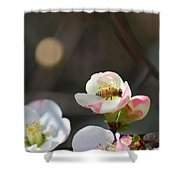 Bee On Japanese Quince Shower Curtain