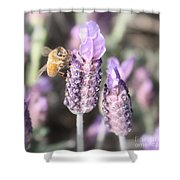 Bee On Lavender Square Shower Curtain
