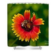 Bee On Orange Flower Shower Curtain