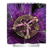 Bee On Passion Flower Brazil Shower Curtain by Pete Oxford