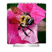 Bee On Petunia Shower Curtain