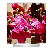 Bee On Pink Blossoms 031015aa Shower Curtain